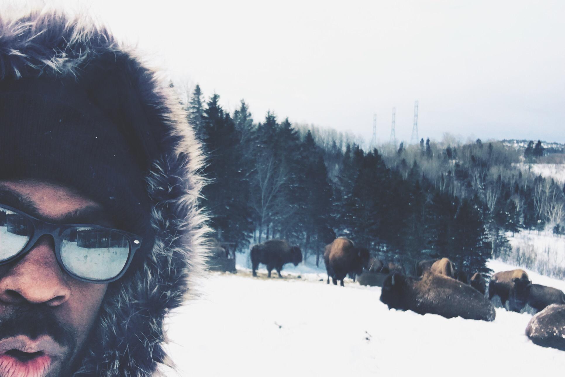 Quebec Maritime, bison
